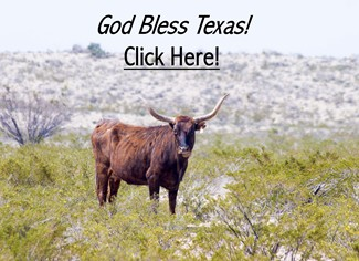 Texas Longhorn - God Bless Texas