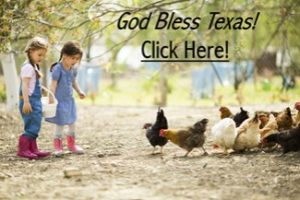 Chickens and Little Girls - God Bless Texas