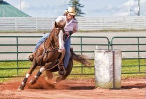 Amarillo Quarter Horse In Action